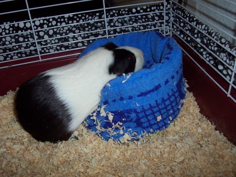 Sew A Dollar Store Guinea Pig Bed Dollar Store Crafts
