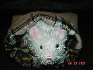 hamstercozy
