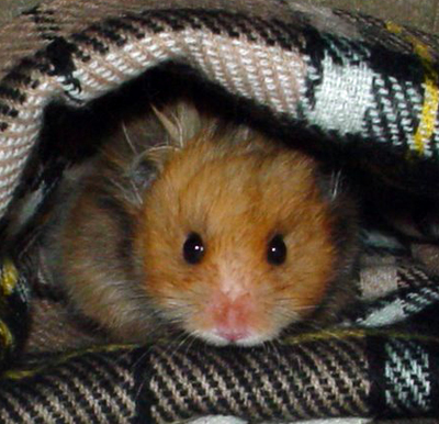 hamstercozy-withfred-detail