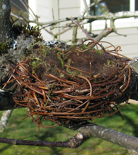dollar store crafts blog archive make a natural looking bird birds nest 445x500