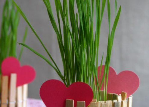 clothespin planter