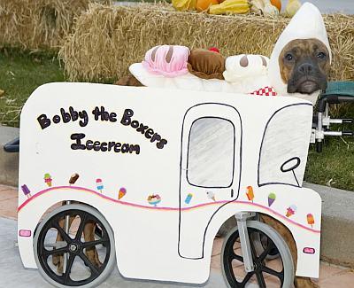 Make Your Dog a Halloween Costume 6 Doggone Funny Ideas