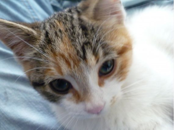 kitten temperature