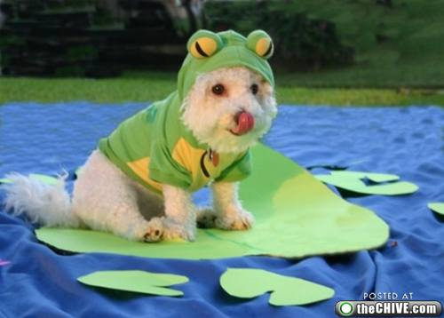Image result for dog in a frog costume