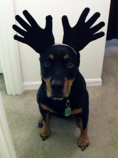Melinda's dog Kona as a moose