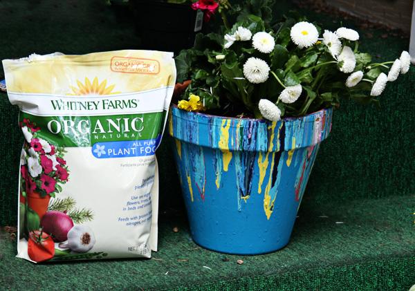 painted planter with fertilzier