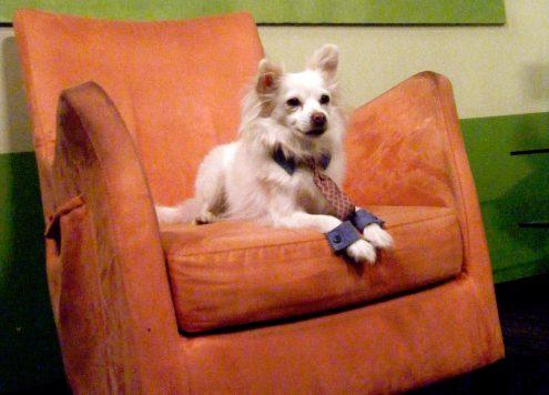 office dog costume