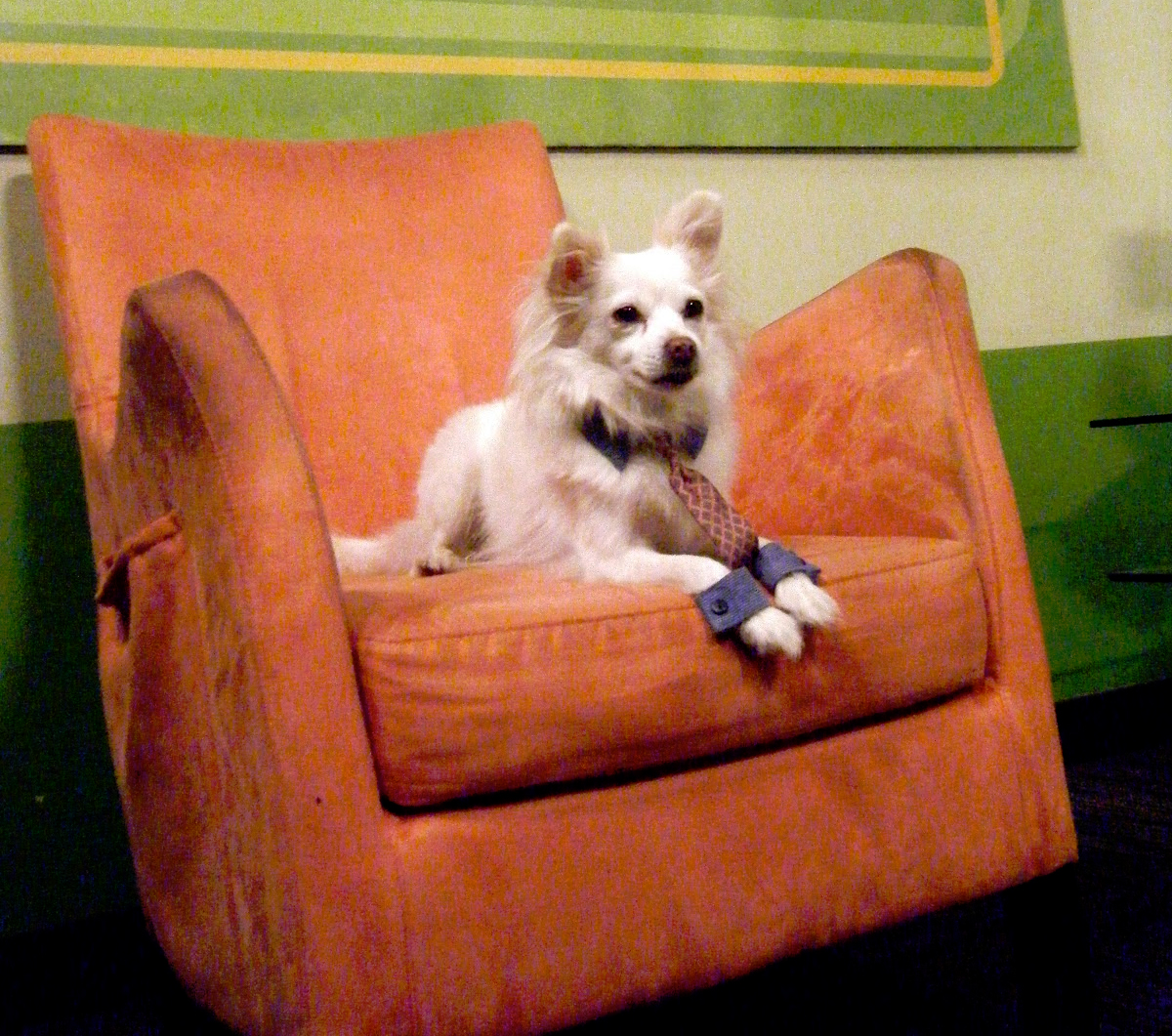 office pet ideas. Office Pet Ideas M