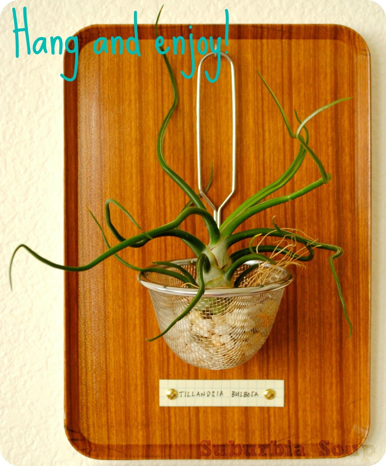 make a hanging air plant display dollar store crafts. Black Bedroom Furniture Sets. Home Design Ideas