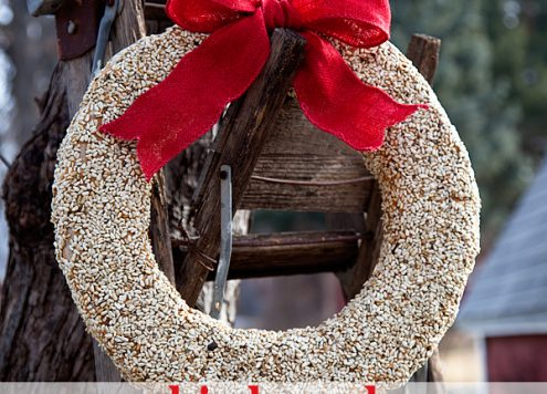 Make a Birdseed Winter Wreath