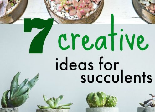 7 creative ideas for decorating with succulents