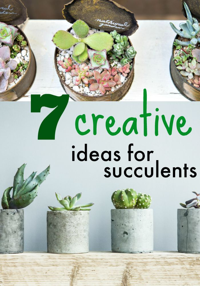 7 Ideas For Decorating With Succulents Dollar Store Crafts